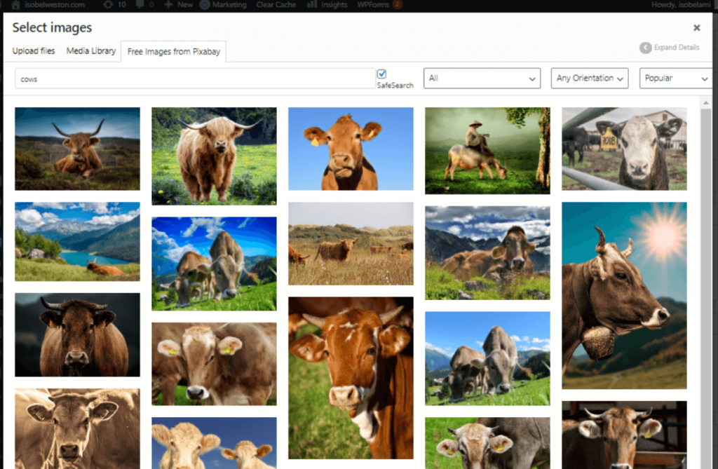 Collage of multiple images of cows from Pixabay